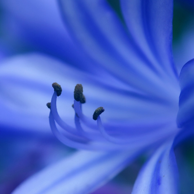 flower-nature-blur-flora-petal 图片素材