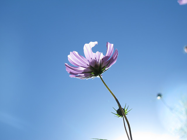flower-no-person-nature-summer-sky picture material