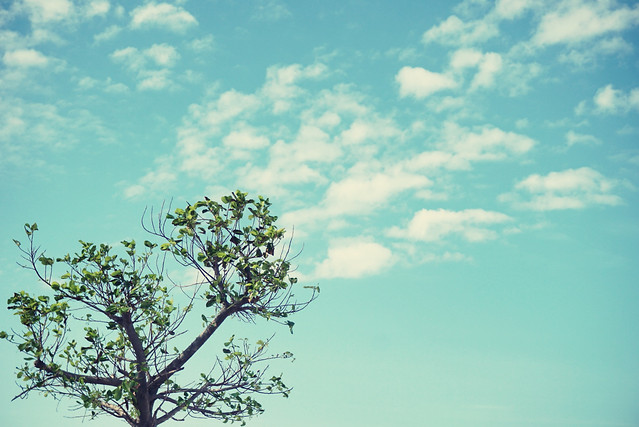 sky-nature-tree-landscape-cloud picture material