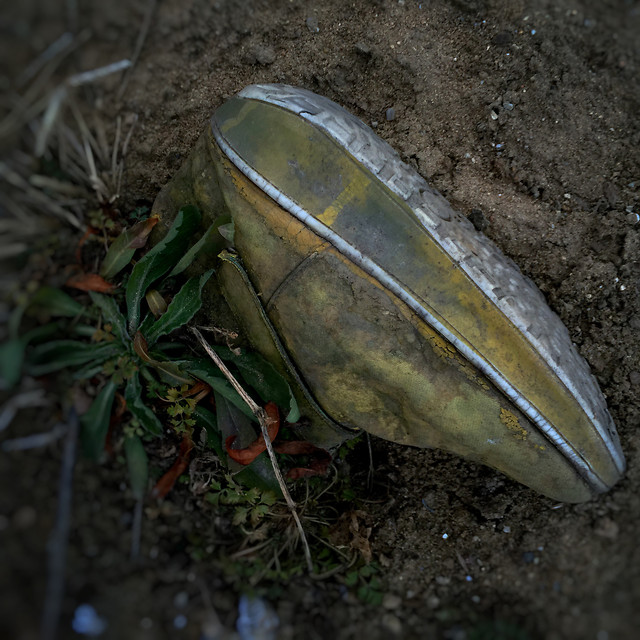 no-person-nature-food-still-life-wood picture material