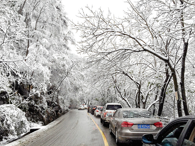 winter-snow-tree-road-frost picture material