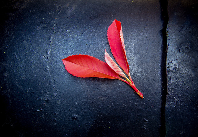 no-person-nature-red-flower-still-life picture material