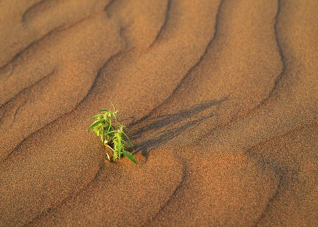 no-person-sand-desert-beach-invertebrate picture material