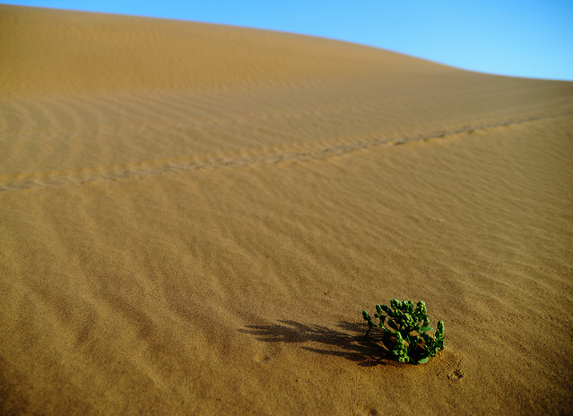 desert-sand-dune-arid-no-person picture material