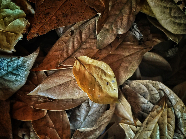 fall-leaf-nature-flora-dry picture material