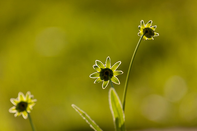 nature-no-person-growth-flora-flower picture material