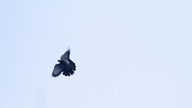 bird-flight-no-person-sky-wildlife picture material