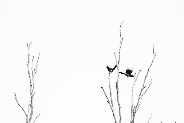 nature-silhouette-desktop-winter-bird picture material