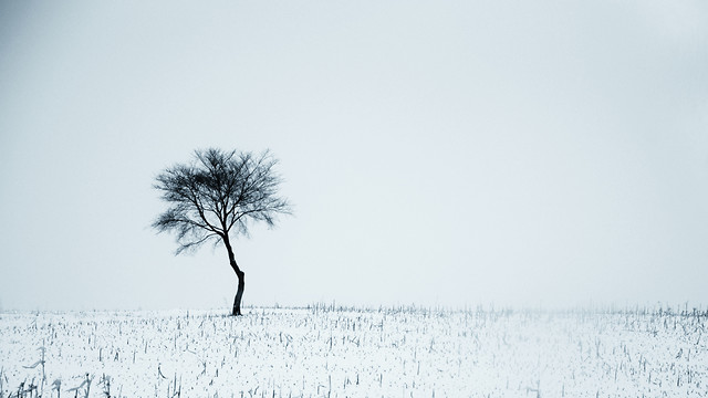 winter-snow-fog-landscape-tree 图片素材