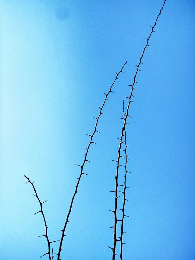 barbed-wire-no-person-sky-wire-nature picture material
