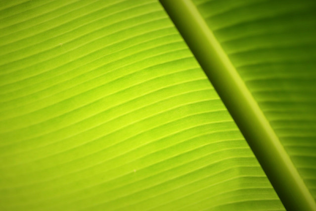leaf-flora-abstract-desktop-green picture material