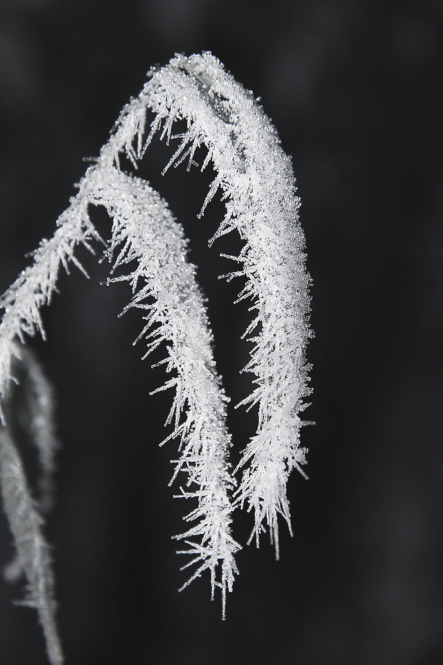 frost-no-person-winter-nature-snow picture material