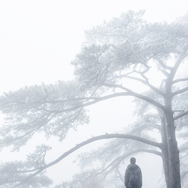 snow-winter-tree-wood-fog 图片素材
