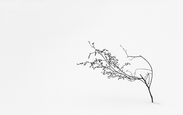 tree-abstract-bird-art-desktop 图片素材