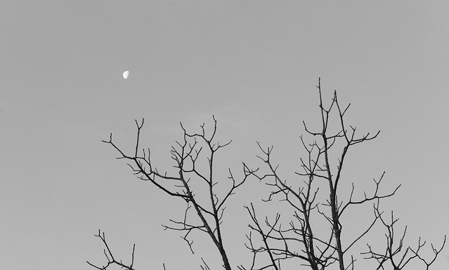 tree-bird-no-person-silhouette-nature picture material