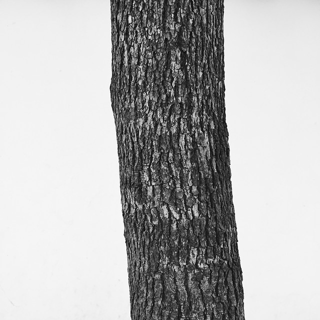 wood-no-person-tree-black-white-nature picture material