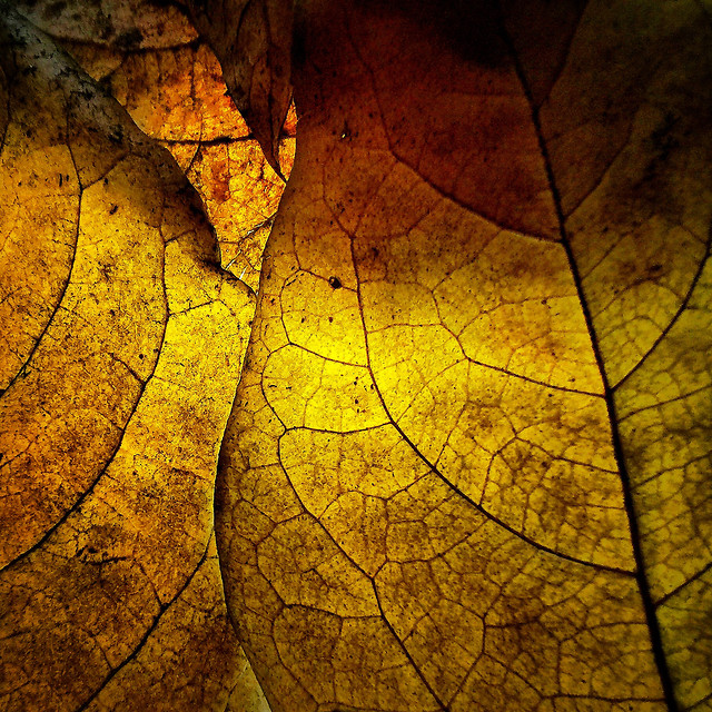 texture-leaf-desktop-abstract-pattern picture material