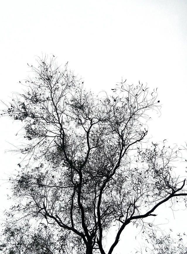 tree-landscape-branch-wood-nature 图片素材