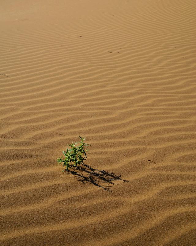 beach-sand-seashore-water-footprint picture material