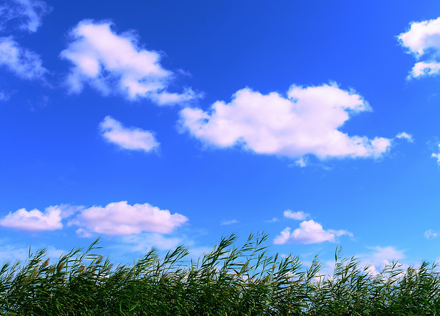 nature-sky-no-person-summer-cloud picture material