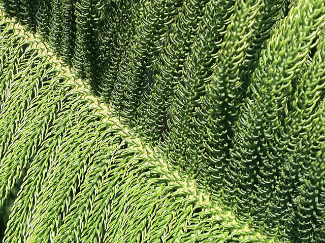 flora-pattern-desktop-nature-growth picture material