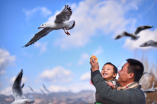 bird-seagulls-outdoors-wildlife-flight picture material