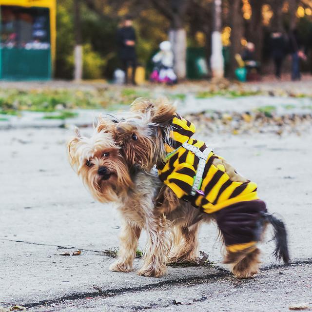 animal-dog-pet-cute-portrait picture material
