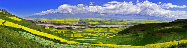 field-agriculture-landscape-farm-rural picture material
