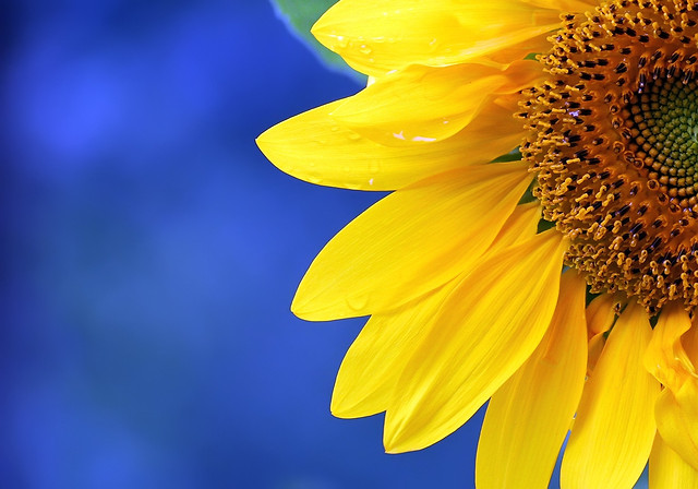 flower-nature-no-person-summer-bright picture material