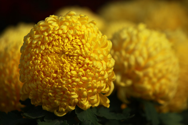 no-person-nature-flora-flower-yellow picture material