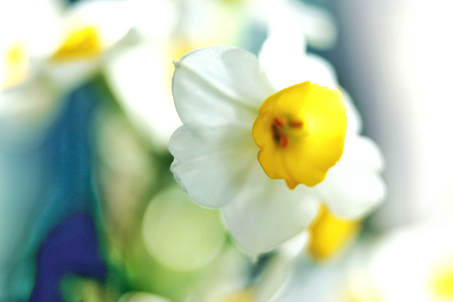 flower-nature-easter-blur-no-person picture material