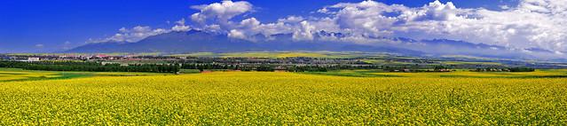 field-agriculture-landscape-crop-farm picture material