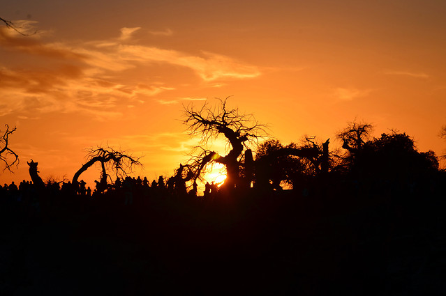 sunset-silhouette-dawn-backlit-tree picture material