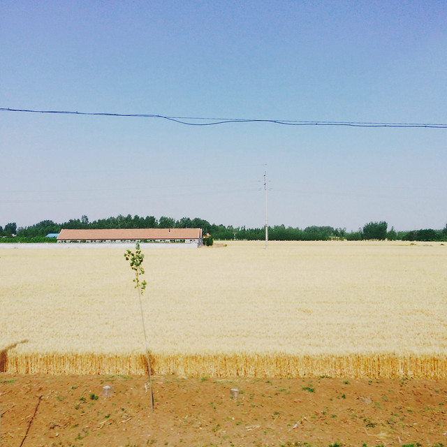 landscape-agriculture-tree-farm-field picture material