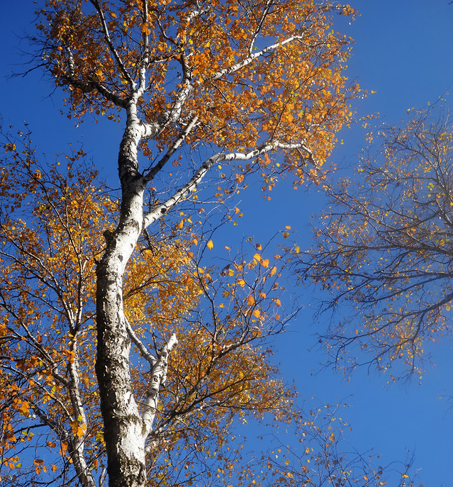 tree-branch-no-person-fall-leaf picture material