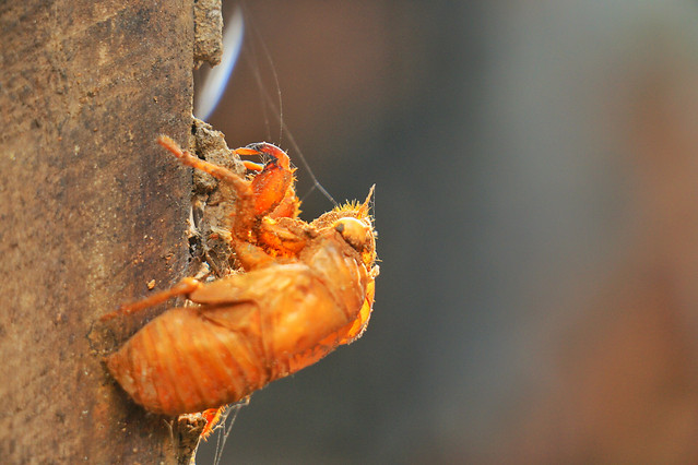 insect-invertebrate-no-person-nature-wildlife picture material