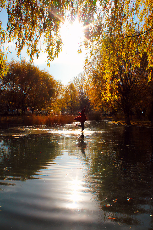 fall-tree-reflection-waterway-water picture material