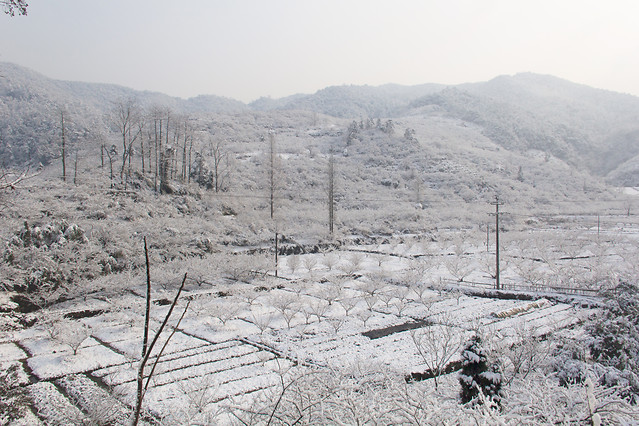 snow-winter-landscape-nature-cold 图片素材
