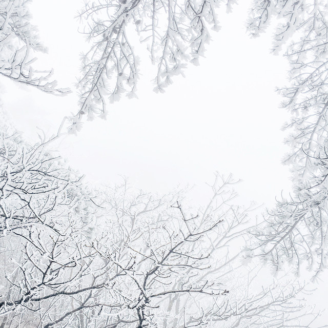 winter-snow-cold-frost-tree 图片素材