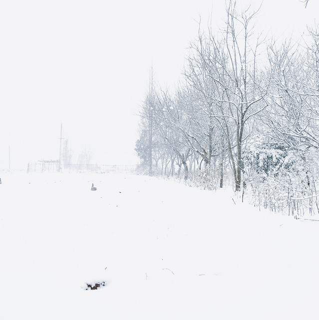 winter-snow-cold-weather-frost 图片素材