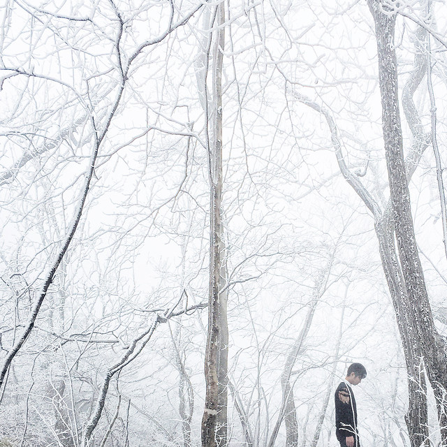 winter-snow-tree-wood-cold 图片素材