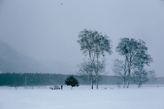 fog-tree-winter-snow-landscape 图片素材