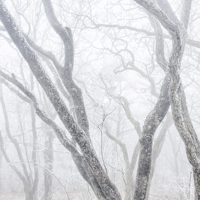 winter-snow-tree-cold-frost picture material