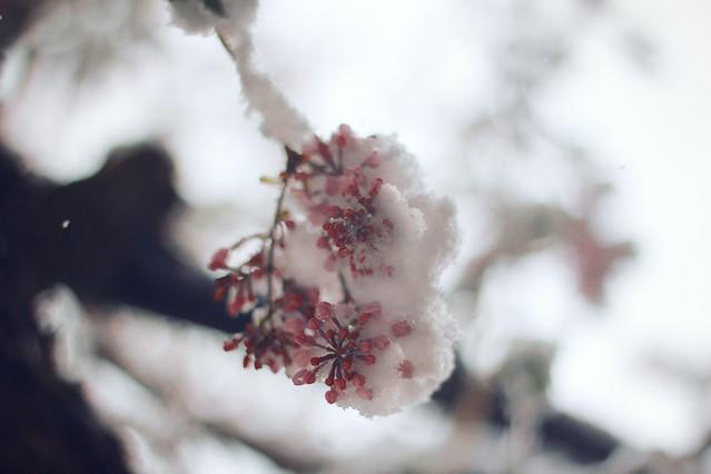 nature-flower-tree-winter-blur 图片素材