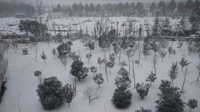 winter-snow-tree-no-person-cold 图片素材