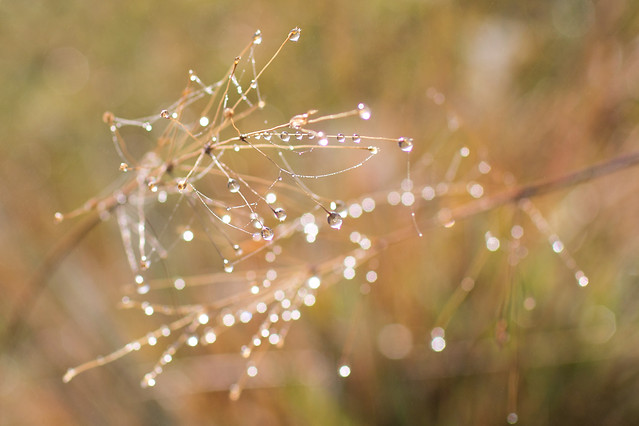 dew-nature-spider-dawn picture material