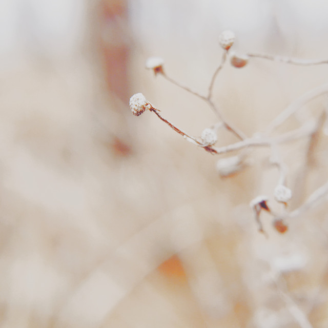nature-dof-blur-flower-winter picture material