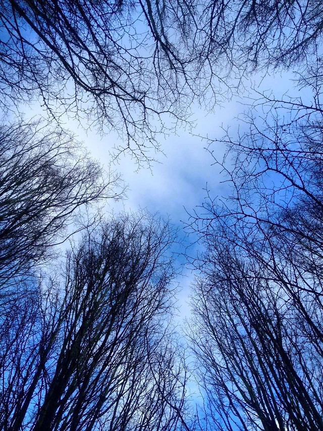tree-branch-winter-sky-wood picture material
