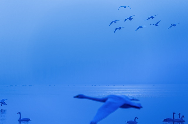 no-person-water-seagulls-wildlife-bird 图片素材