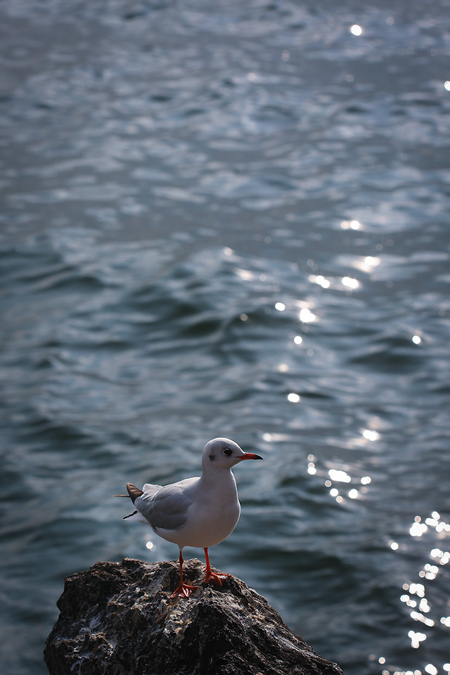 water-sea-bird-nature-ocean picture material